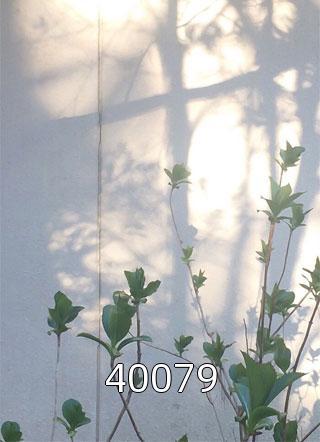 40079小说